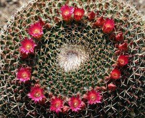 cactus_4283124884_6a38c89a78_z